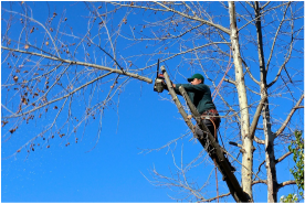 Tempe-Tree-Services